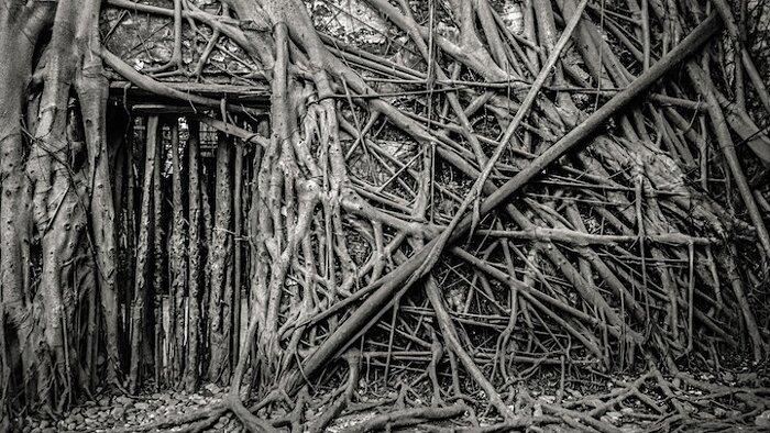 natura-conquista-edifici-uomo-radici-alberi-banyan-taiwan-09