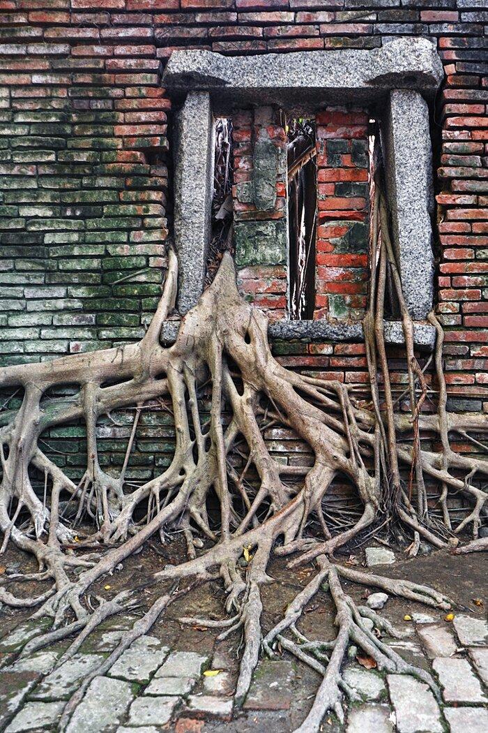 natura-conquista-edifici-uomo-radici-alberi-banyan-taiwan-11