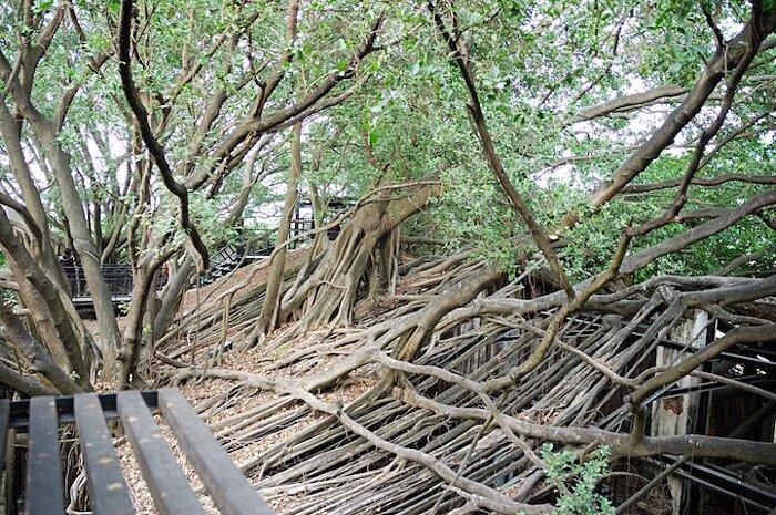 natura-conquista-edifici-uomo-radici-alberi-banyan-taiwan-13