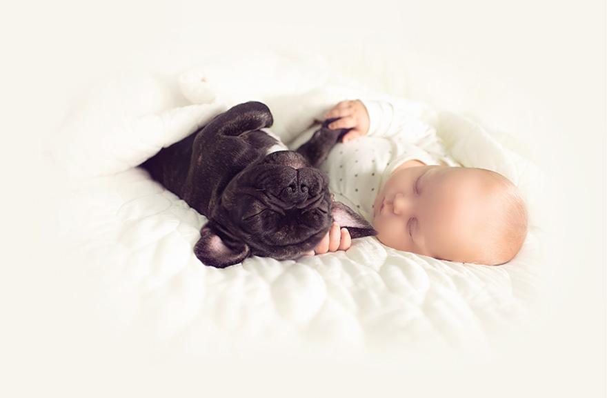 neonato-cucciolo-bullgog-amicizia-ivette-ivens-02