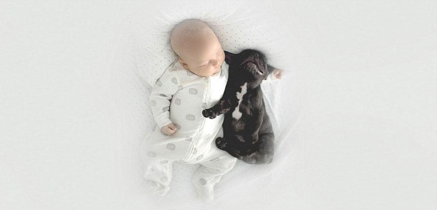 neonato-cucciolo-bullgog-amicizia-ivette-ivens-06