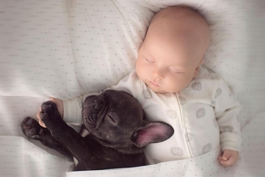 neonato-cucciolo-bullgog-amicizia-ivette-ivens-07