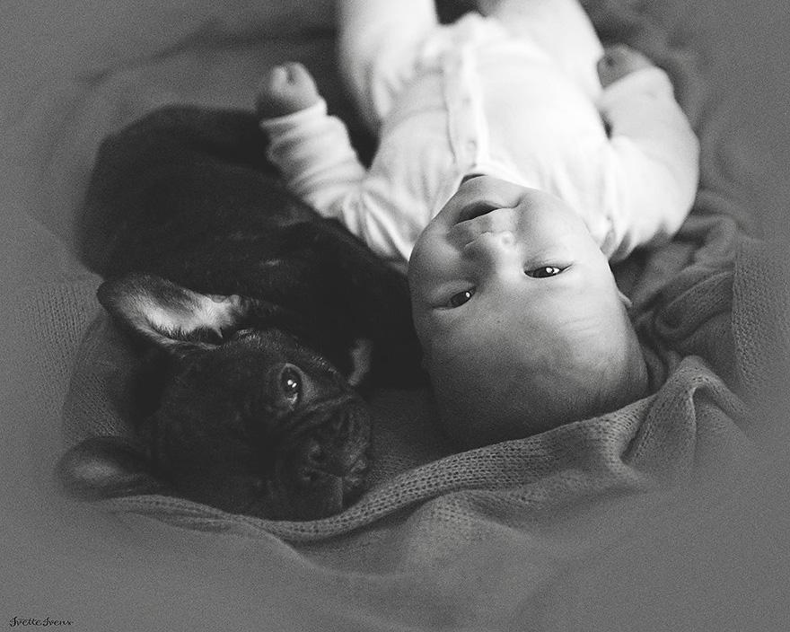 neonato-cucciolo-bullgog-amicizia-ivette-ivens-08