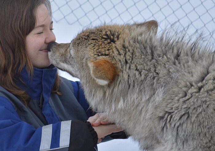parco-norvegia-visitatori-giocano-con-lupi-polar-park-201