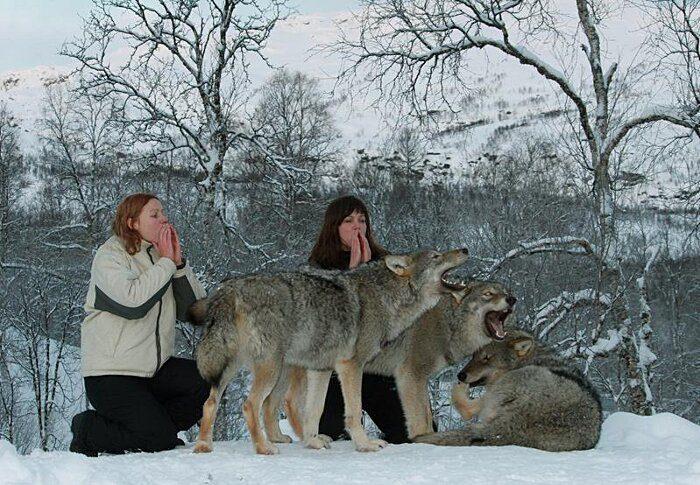 parco-norvegia-visitatori-giocano-con-lupi-polar-park-205