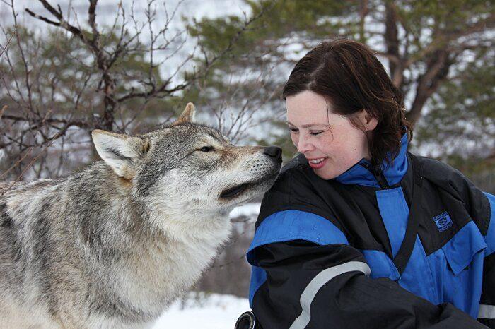 parco-norvegia-visitatori-giocano-con-lupi-polar-park-211