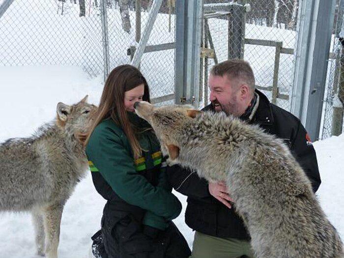 parco-norvegia-visitatori-giocano-con-lupi-polar-park-213