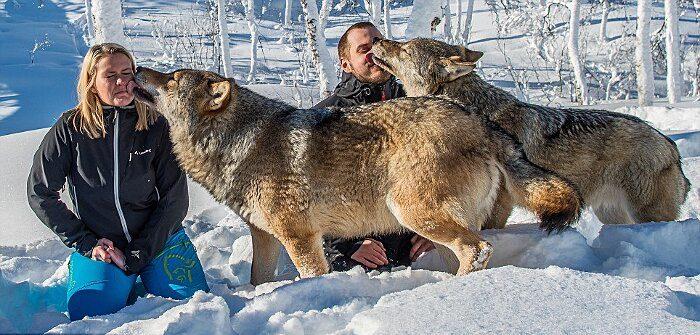 parco-norvegia-visitatori-giocano-con-lupi-polar-park-215