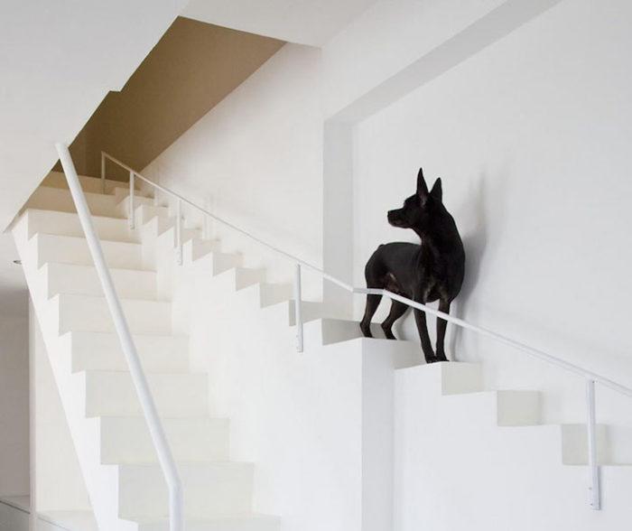 scala-per-piccoli-animali-domestici-casa-moderna-07BEACH-1