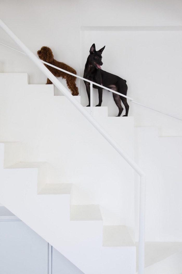 scala-per-piccoli-animali-domestici-casa-moderna-07BEACH-3