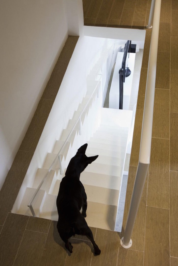 scala-per-piccoli-animali-domestici-casa-moderna-07BEACH-4
