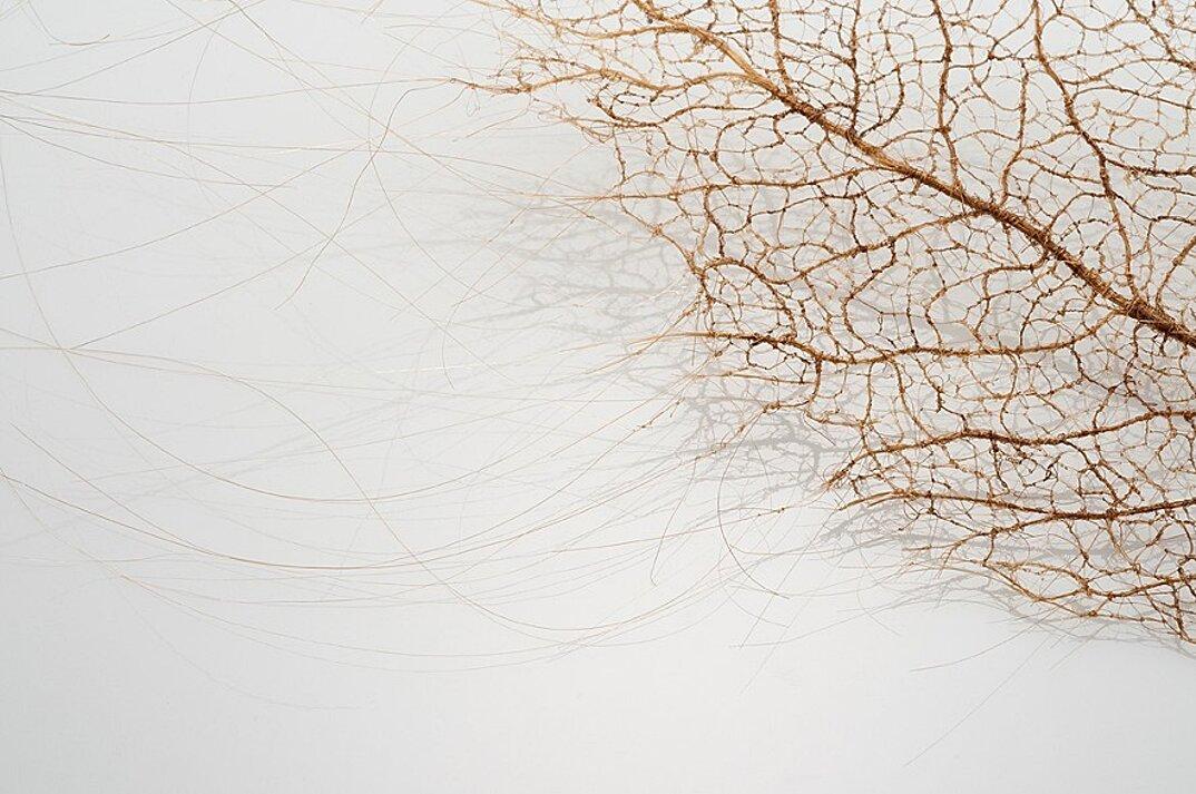 sculture-foglie-secche-capelli-umani-arte-jenine-shereos-03