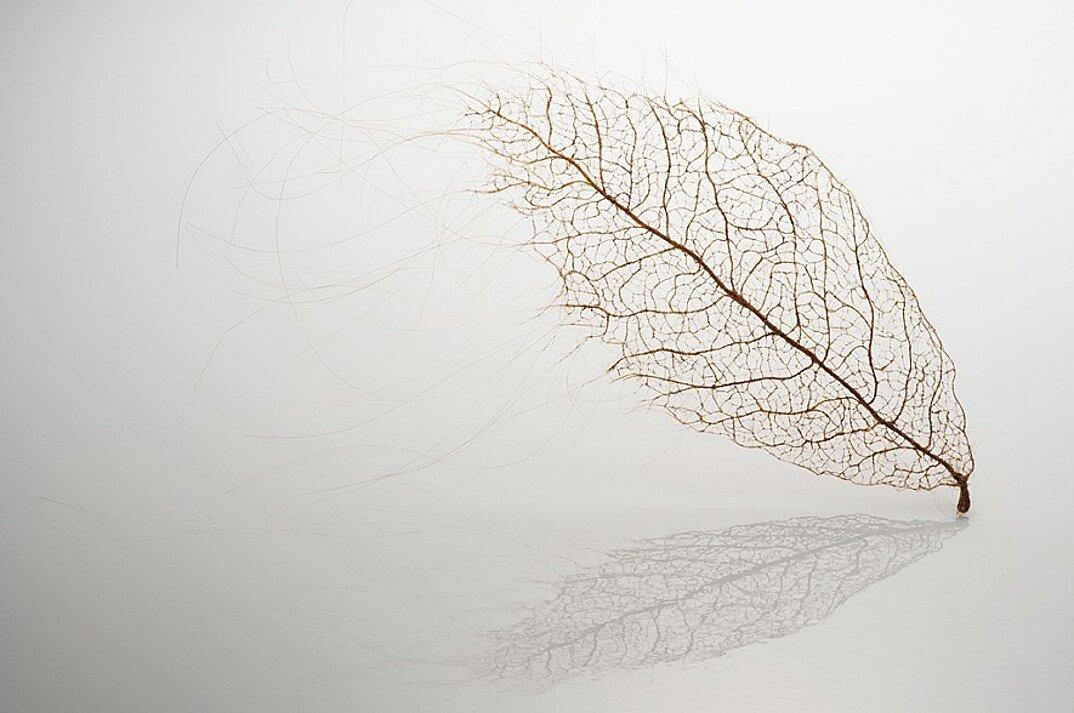 sculture-foglie-secche-capelli-umani-arte-jenine-shereos-06