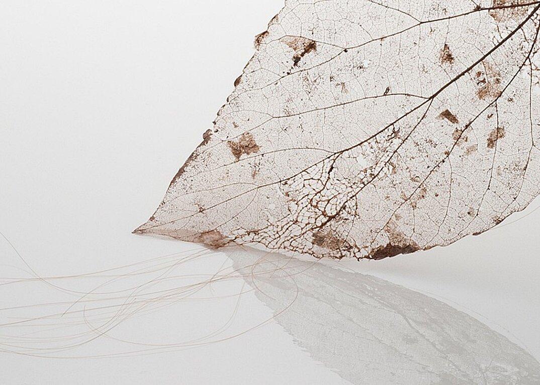 sculture-foglie-secche-capelli-umani-arte-jenine-shereos-07