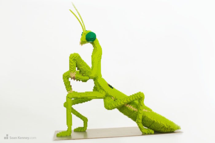 sculture-lego-animali-selvatici-sean-kennedy-05