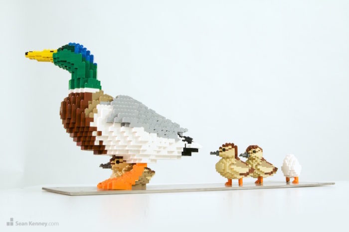sculture-lego-animali-selvatici-sean-kennedy-09