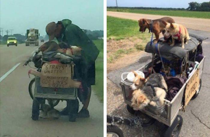 senzatetto-aiuta-cani-randagi-attraversa-usa-in-bicicletta-steve-2
