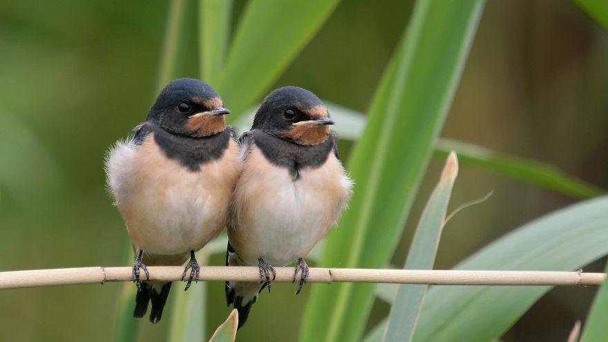 uccelli-stretti-insieme-cercano-calore-01