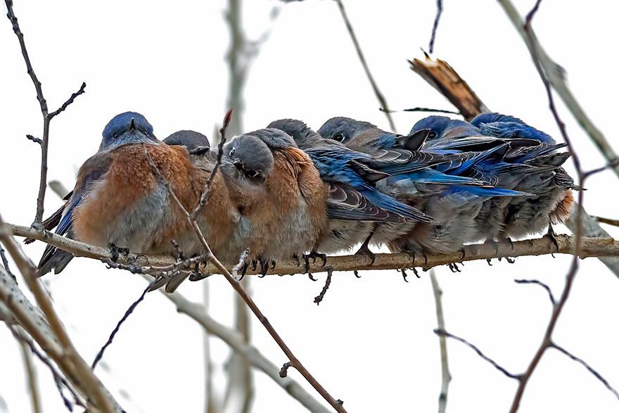 uccelli-stretti-insieme-cercano-calore-03