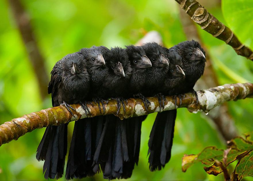 uccelli-stretti-insieme-cercano-calore-04