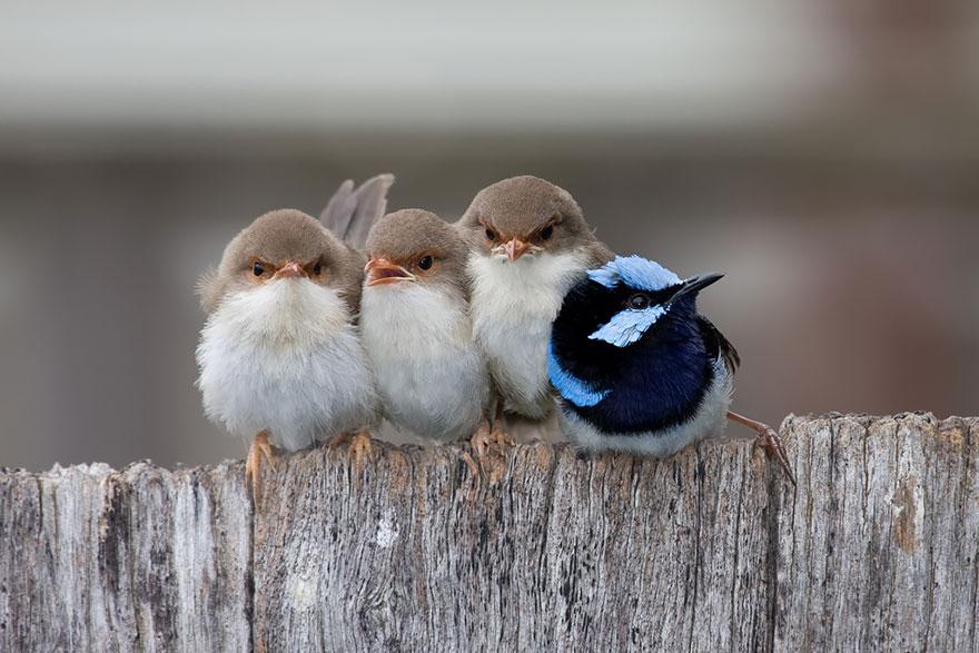 uccelli-stretti-insieme-cercano-calore-05