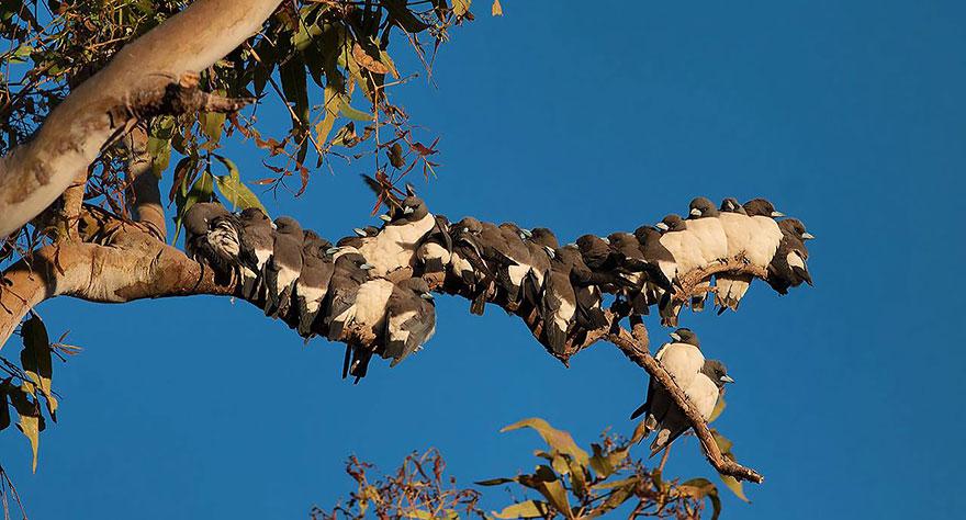 uccelli-stretti-insieme-cercano-calore-06