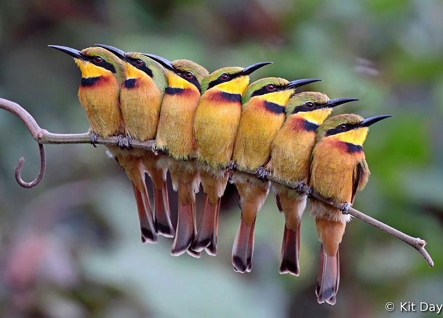 uccelli-stretti-insieme-cercano-calore-07