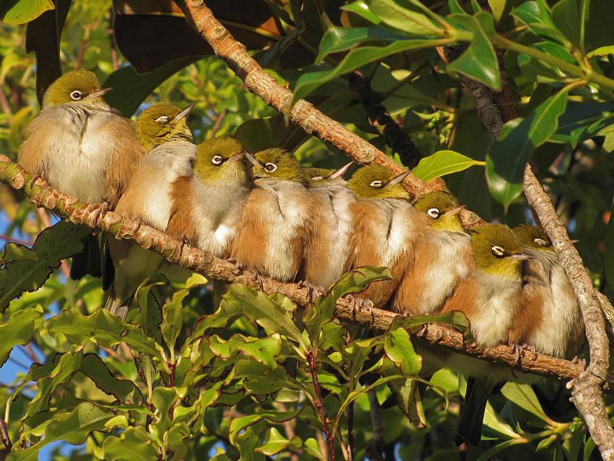 uccelli-stretti-insieme-cercano-calore-08