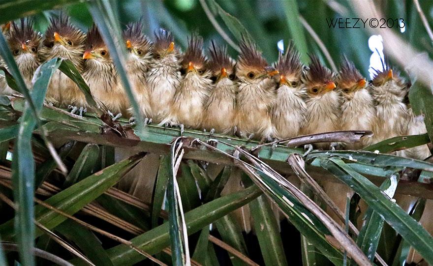 uccelli-stretti-insieme-cercano-calore-09