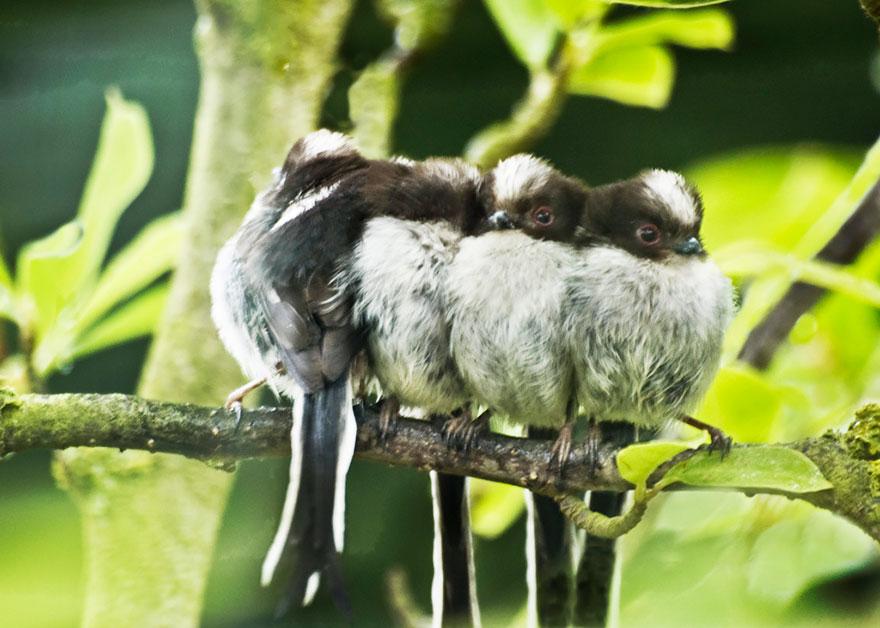 uccelli-stretti-insieme-cercano-calore-10