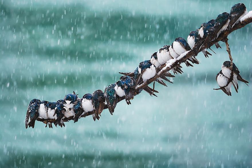 uccelli-stretti-insieme-cercano-calore-12