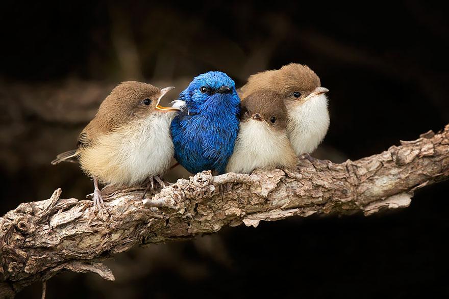 uccelli-stretti-insieme-cercano-calore-13