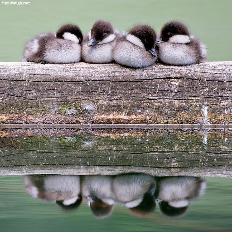 uccelli-stretti-insieme-cercano-calore-14