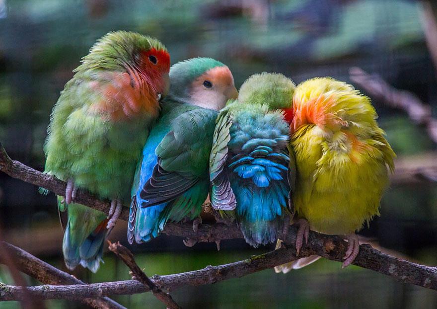 uccelli-stretti-insieme-cercano-calore-15