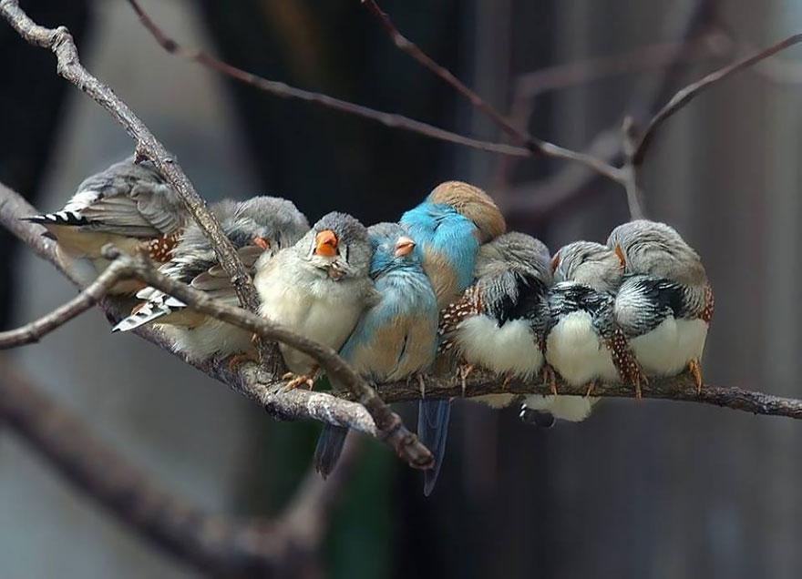 uccelli-stretti-insieme-cercano-calore-16