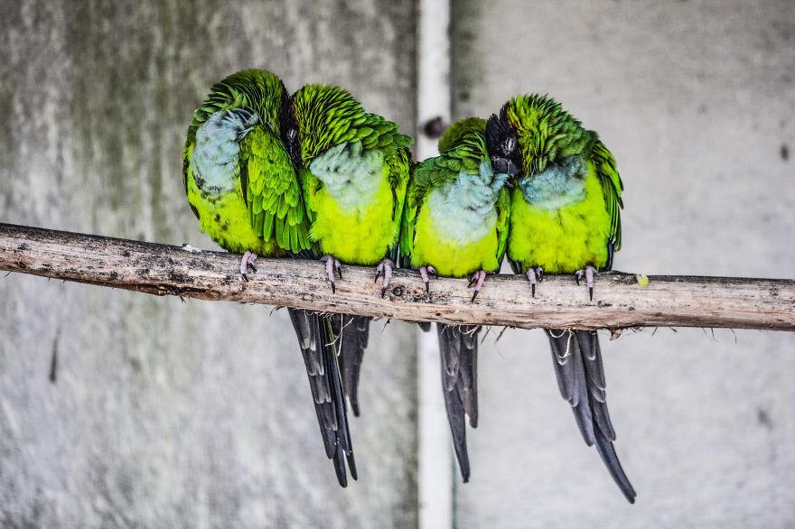 uccelli-stretti-insieme-cercano-calore-17