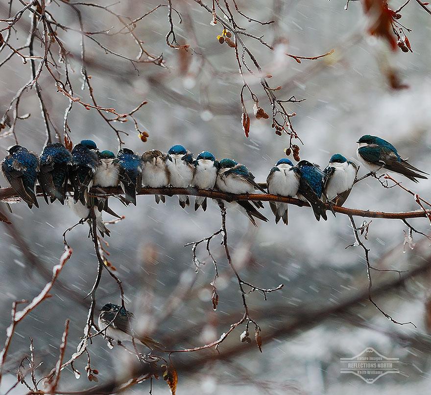 uccelli-stretti-insieme-cercano-calore-19