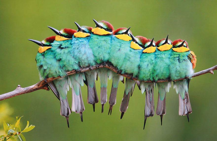 uccelli-stretti-insieme-cercano-calore-21