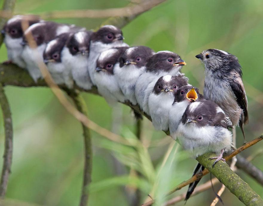 uccelli-stretti-insieme-cercano-calore-22