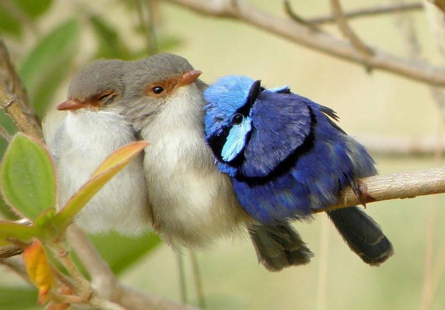 uccelli-stretti-insieme-cercano-calore-24