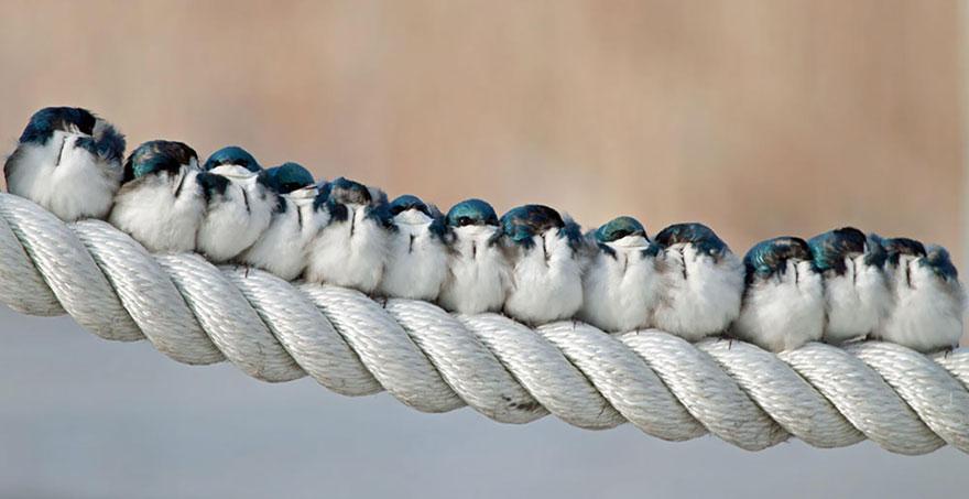 uccelli-stretti-insieme-cercano-calore-25