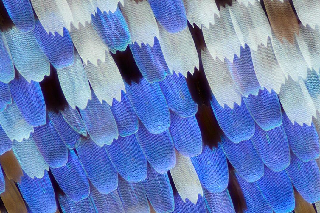 ali-farfalle-fotografia-macro-linden-gledhill-02