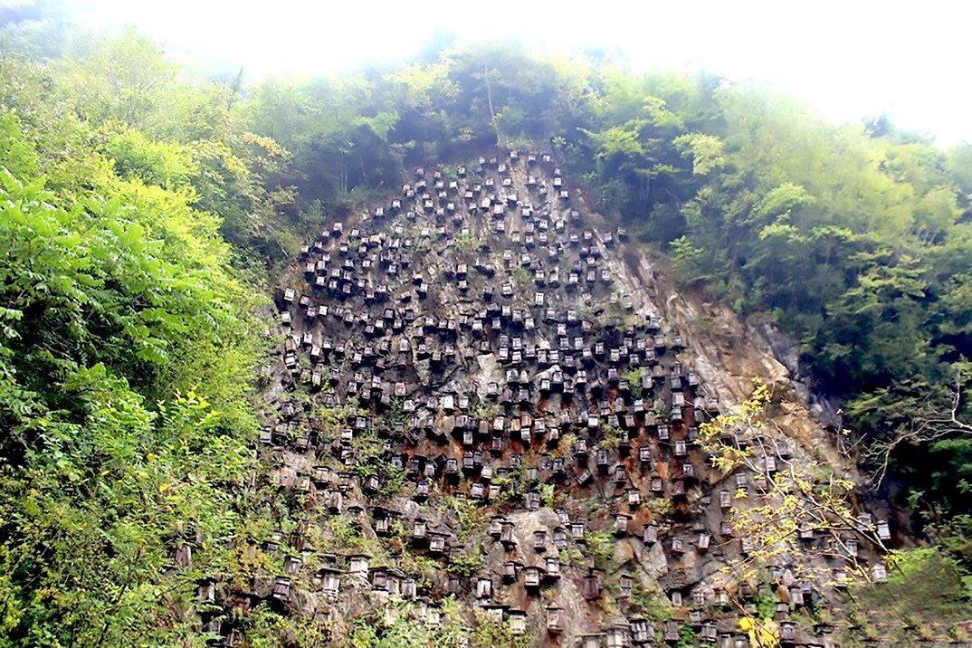 api-asiatiche-estinzione-arnie-montagna-cina-muyu-shennongjia-1-keb