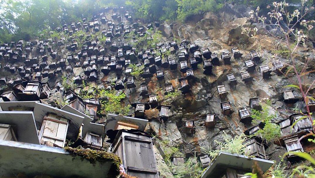 api-asiatiche-estinzione-arnie-montagna-cina-muyu-shennongjia-2-keb