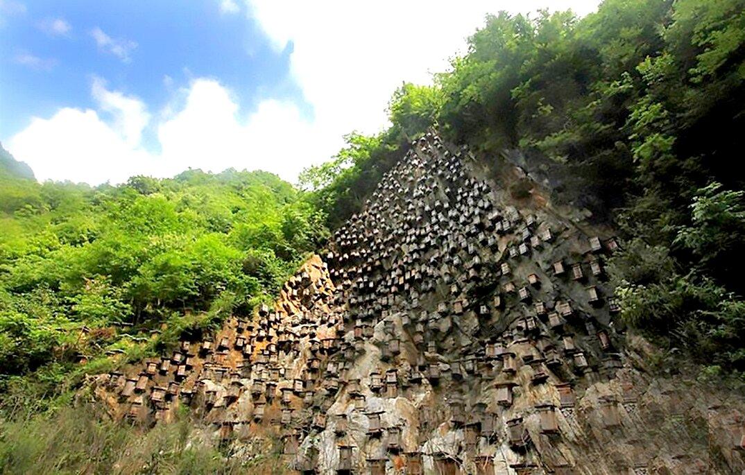 api-asiatiche-estinzione-arnie-montagna-cina-muyu-shennongjia-3-keb