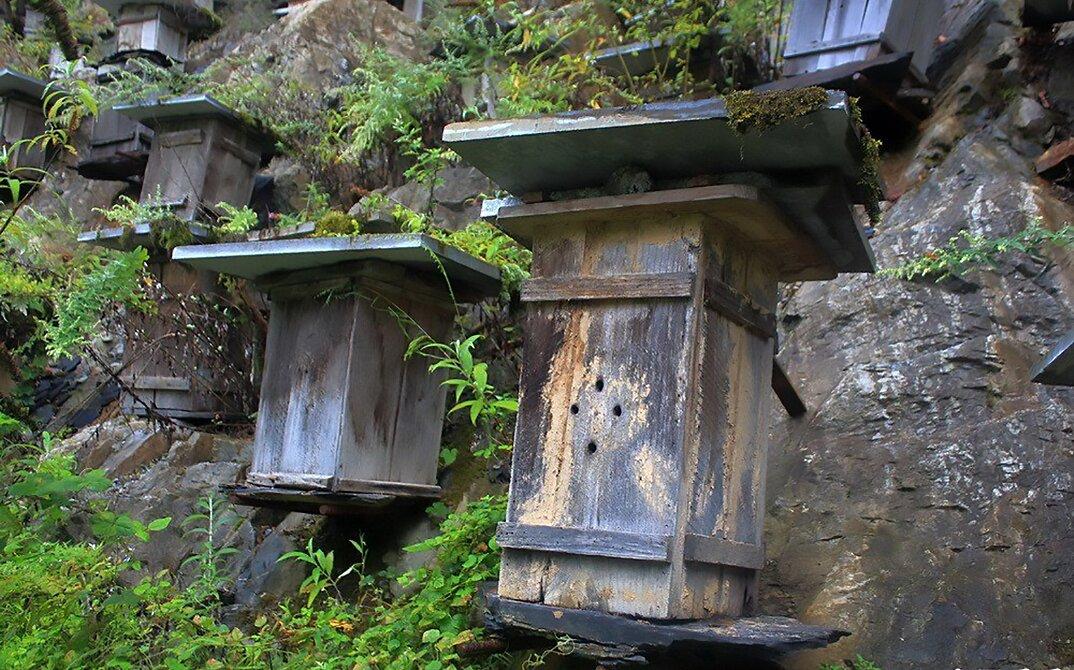 api-asiatiche-estinzione-arnie-montagna-cina-muyu-shennongjia-5-keb
