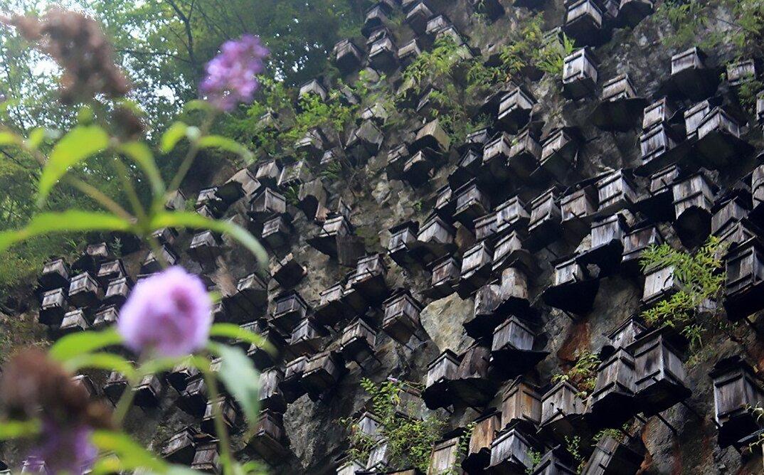 api-asiatiche-estinzione-arnie-montagna-cina-muyu-shennongjia-6-keb