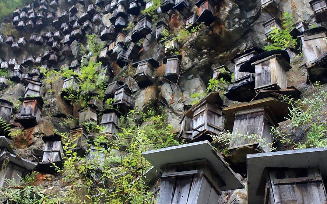 api-asiatiche-estinzione-arnie-montagna-cina-muyu-shennongjia-7-keb
