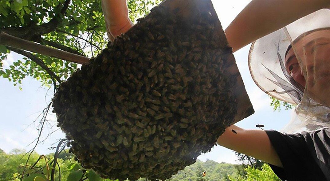 api-asiatiche-estinzione-arnie-montagna-cina-muyu-shennongjia-8-keb