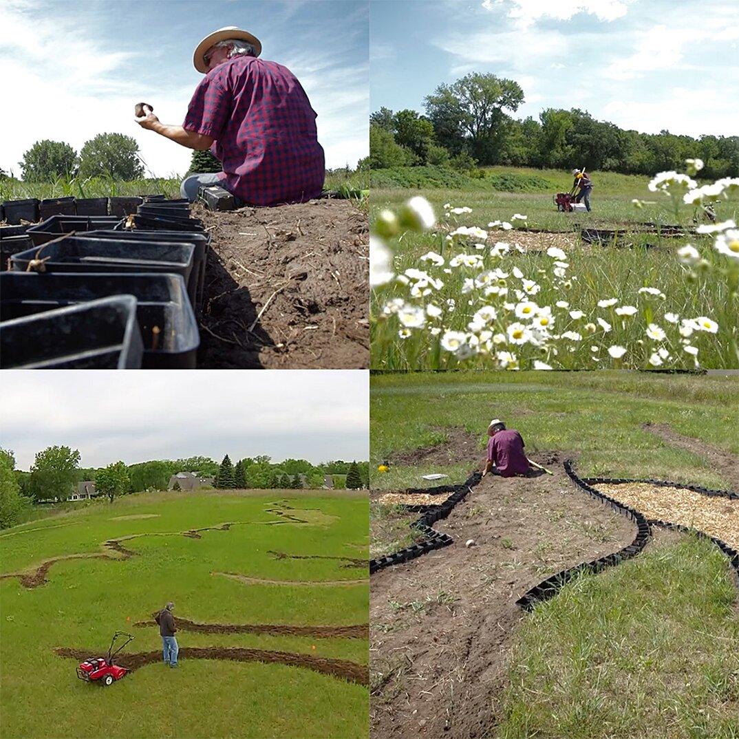 campo-installazione-coltivazione-ulivi-van-gogh-arte-stan-herd-1